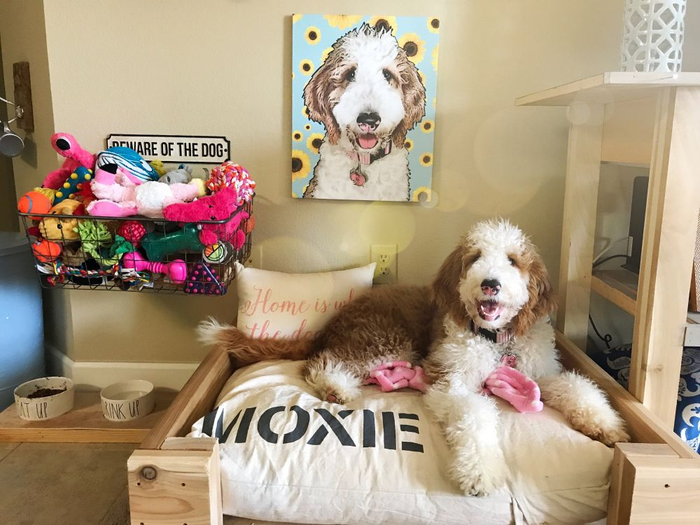 Personalized Dog Beds