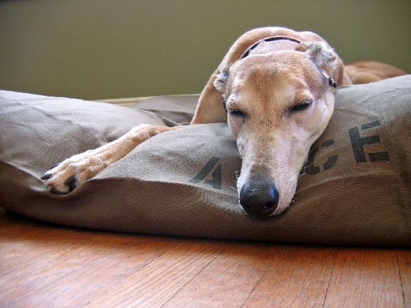 Canvas Dog Bed Covers